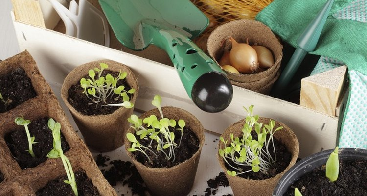 Planting bulbs in January may result in stunted growth the first spring.