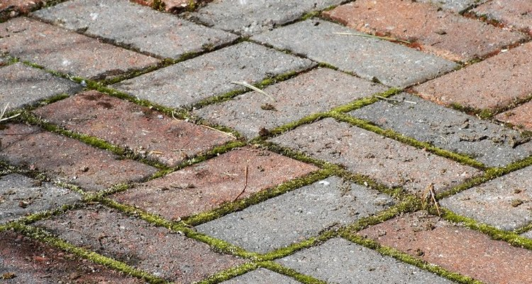 Clean moss and accumulated dirt and grime from brick pavers.