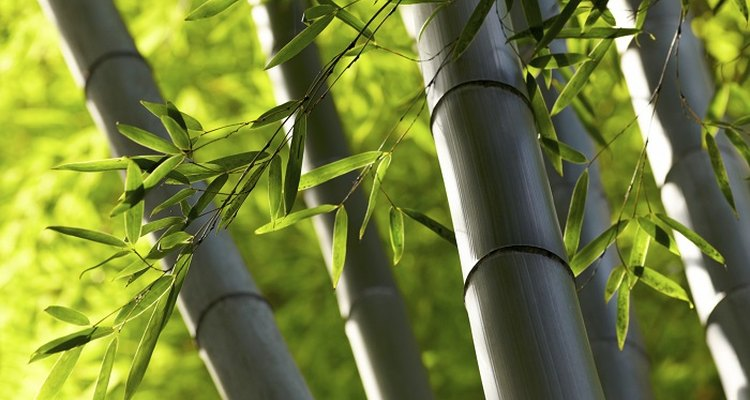 Bamboo canes are sturdy and completely water resistant.