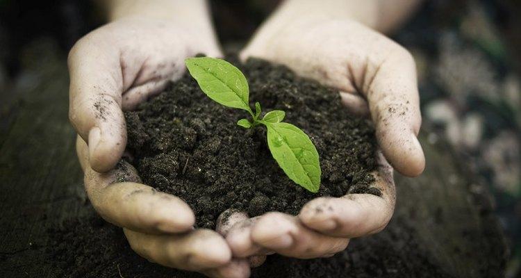 Sterilise soil to kill harmful parasites and bacteria.
