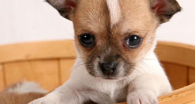 No debes darle tus golosinas a los cachorros.