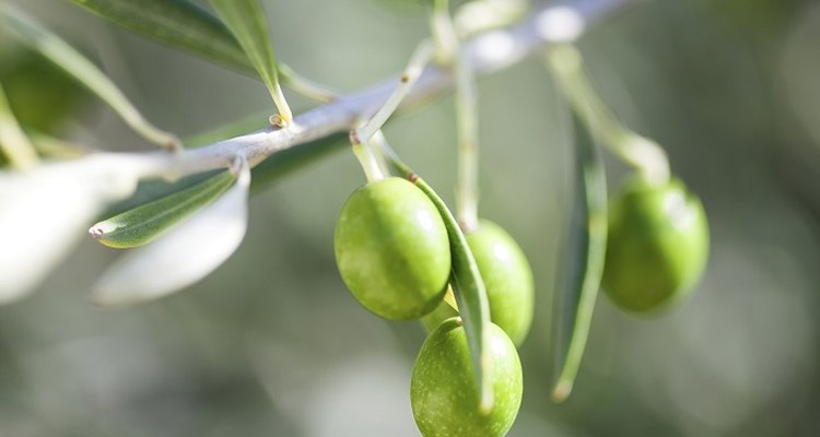 Capture the fresh green colour of the olive.