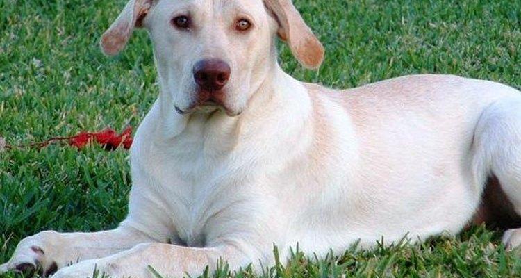 ¡A Buster le encanta nadar, acampar y dar paseos en auto!