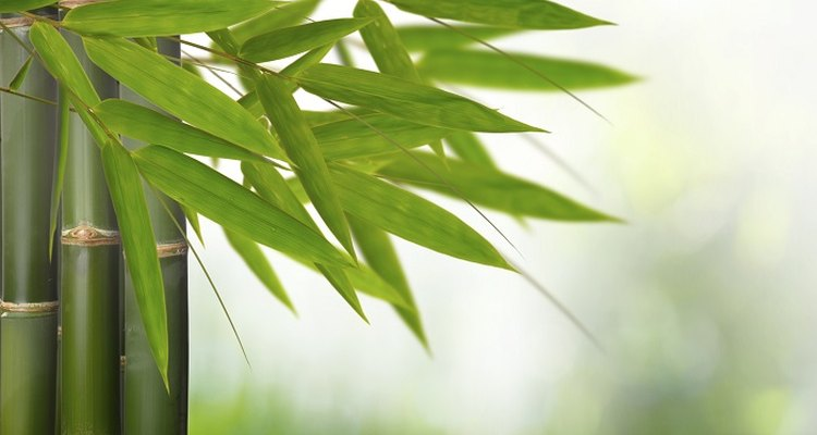 Nurture your bamboo plant back to robust good health.
