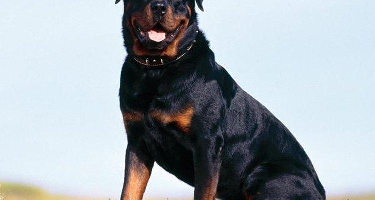 El perro de nombre Toby, fue detenido por morder a una persona en la calle.