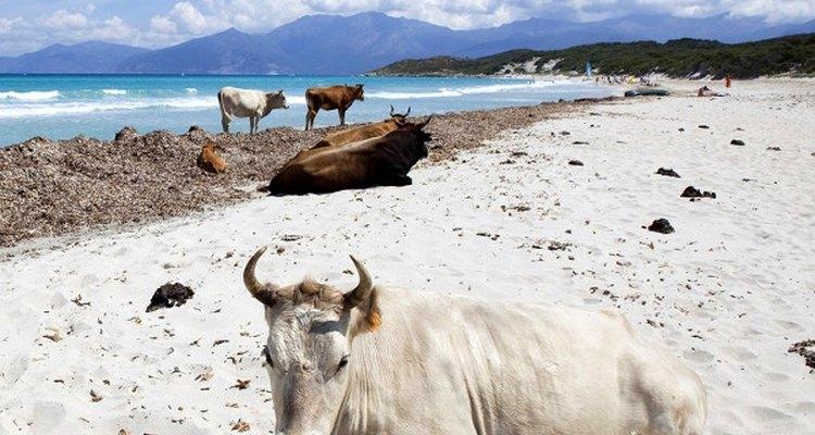 Esta praia, além de linda, possui habitantes especiais