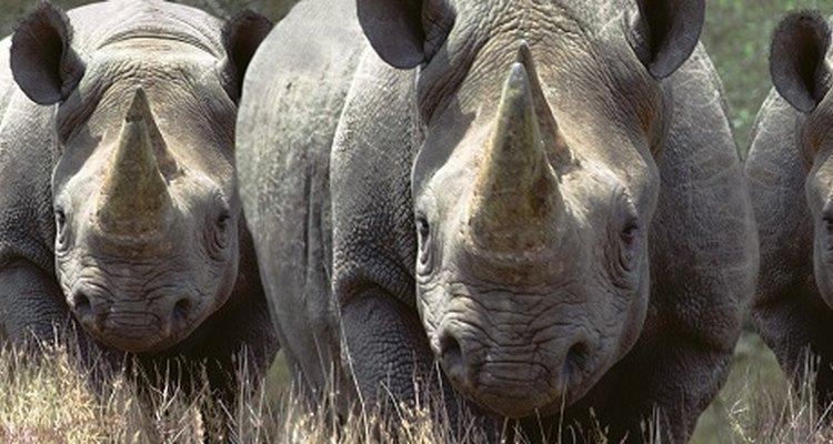 Recreate the distinctive rhino horn with paper mache.