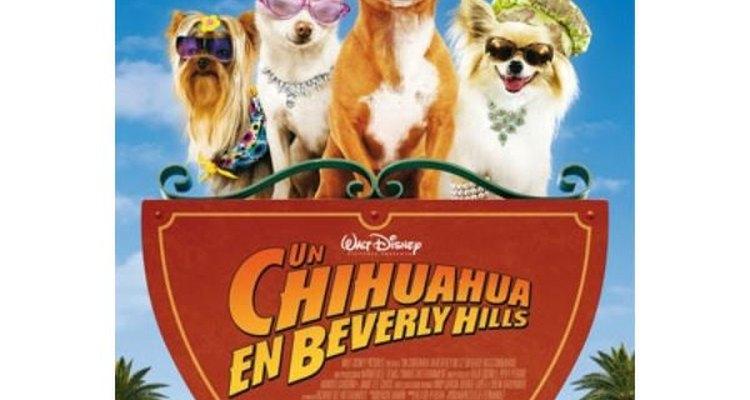 Los animales protagonizan comedias muy divertidas.