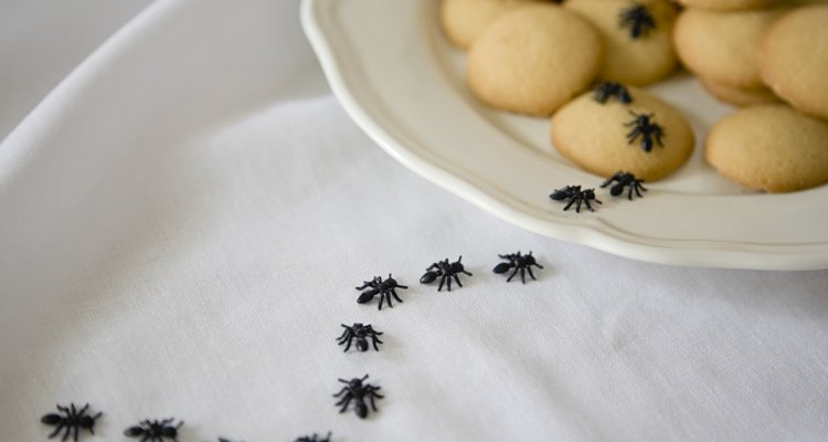 An ant picnic invader is a new twist on a classic costume.