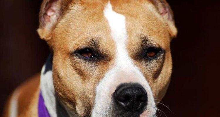 Perros de raza.
