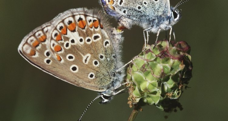 Raising butterflies is both fun and educational.