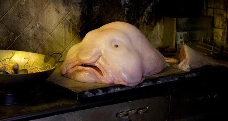 El Blobfish es un pez muy extraño.