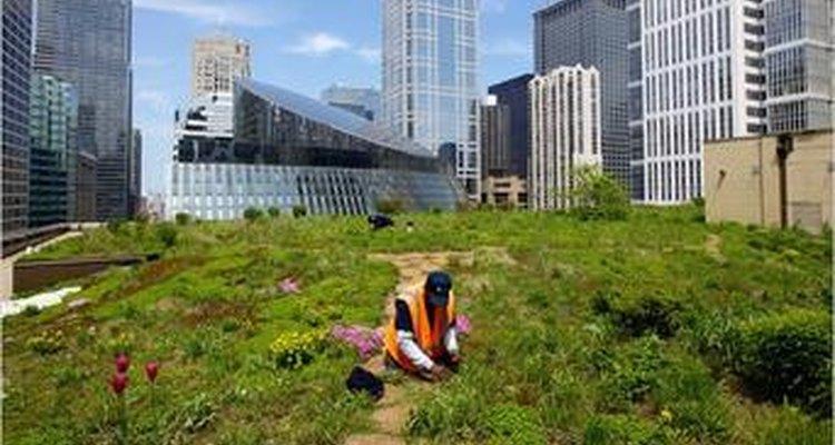 Los techos ecológicos son una forma de reemplazar la vegetación que se pierde en los edificios comerciales y residenciales.