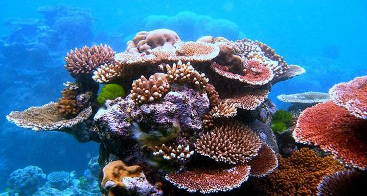 Corales.