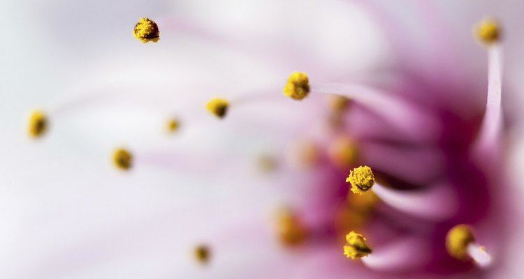 Pollen from flowers.