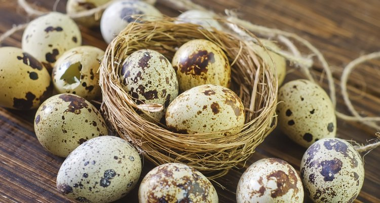 Quail Eggs are Speckled