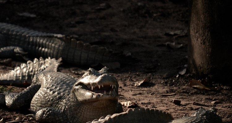 Espécies nativas fazem parte do zoológico de Cuiabá