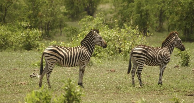Natural habitats allow animals to feel at home and are very informative for the public.