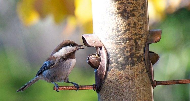 Place a baffler under or above your feeder.