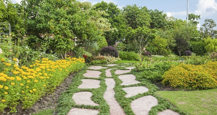 Ground cover between paving stones can range from popular herbs to moss-like plants.