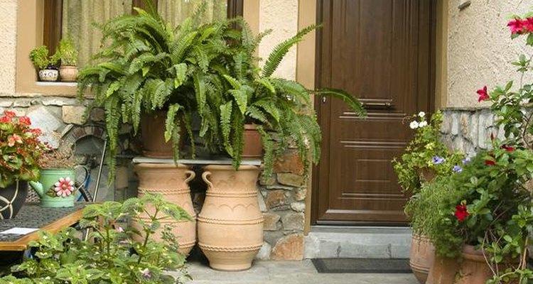 Combina una variedad de tamaños, alturas, formas y texturas, y agrega estallidos de color con plantas en flor.