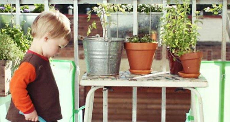 Crea un jardín a tu medida, tomando en cuenta tus alrededores.