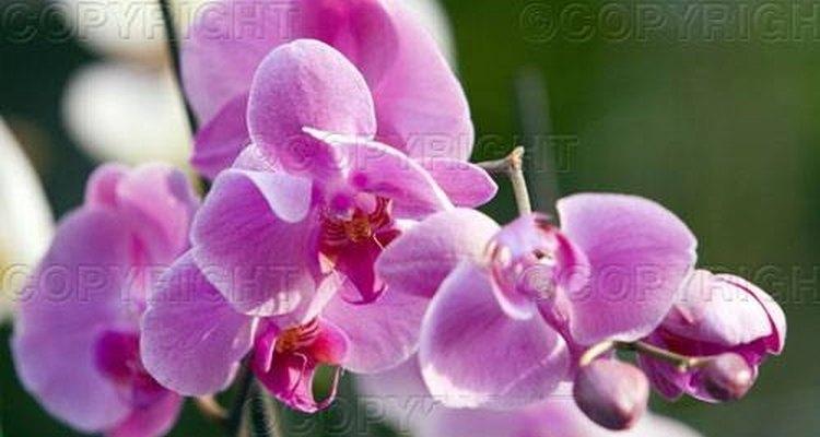 El Amazonas es el hogar de miles de especies de flores.