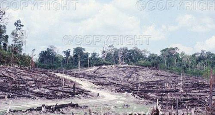 La deforestación esta dañando incontables especies únicas del Amazonas.