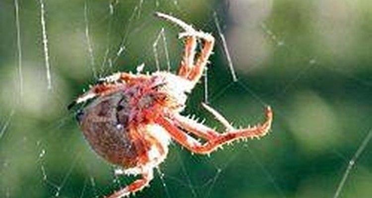 Las arañas producen un hilo de seda.
