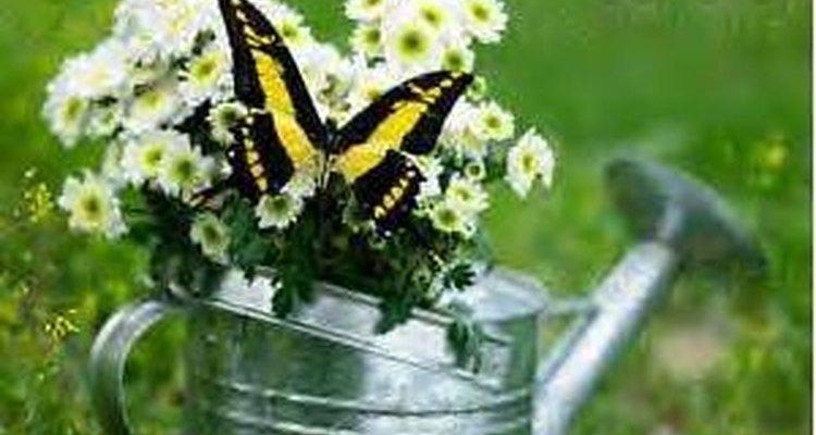 Força das borboletas