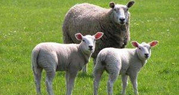 La Biblia asegura que el hombre domina a los animales.