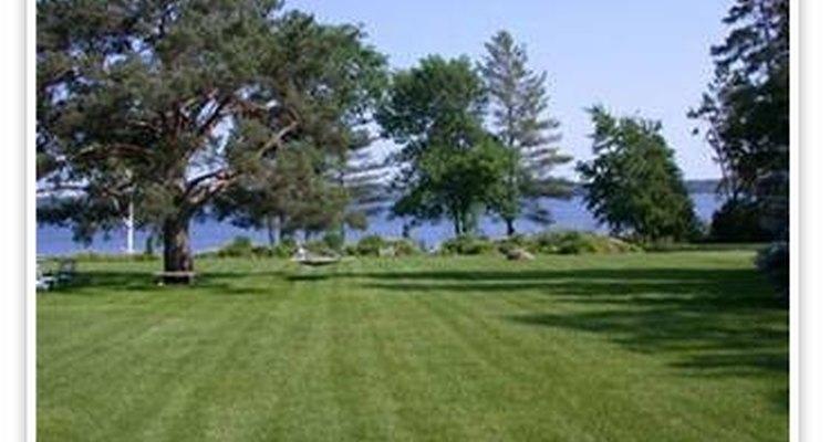 Como manter o gramado saudável e bem cuidado