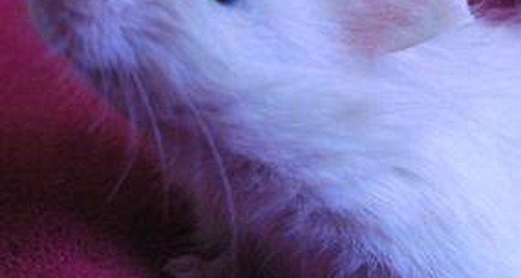 Los ratones son mascotas inteligentes y activas.