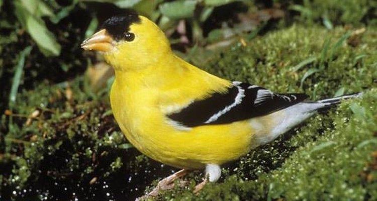 O formato do bico do pássaro fornece pistas sobre sua dieta