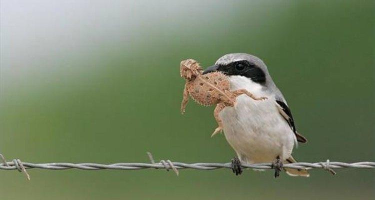 Pássaro onívoro