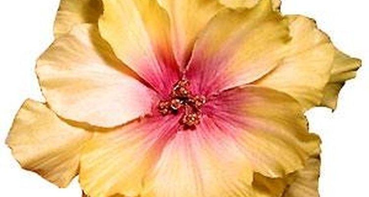 Flores acrescentam um charme maior ao vestido