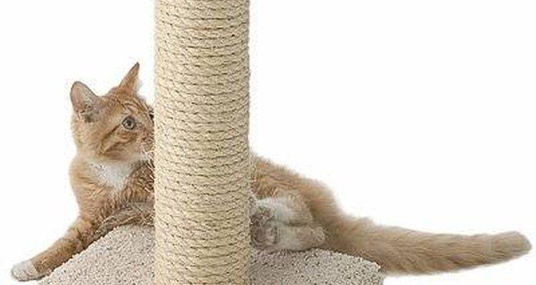 A maioria dos gatos tem preferência por lugares específicos para afiar as unhas, como sofás, tapetes e madeiras