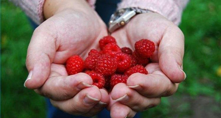 Frutas são uma boa fonte de carboidratos complexos