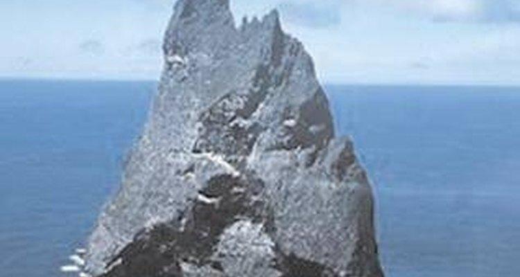 Esforços estão sendo feitos para produzir o bicho-pau de Lord Howe Island em cativeiro