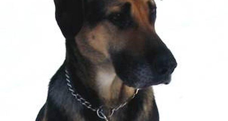 A acepromazina também é usada como calmante de animais ansiosos durante exames e tratamentos