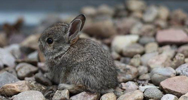 Em algum lugar, esse coelhinho tem patas