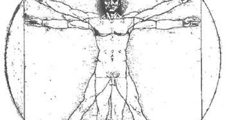 O Homem Vitruviano de Da Vinci
