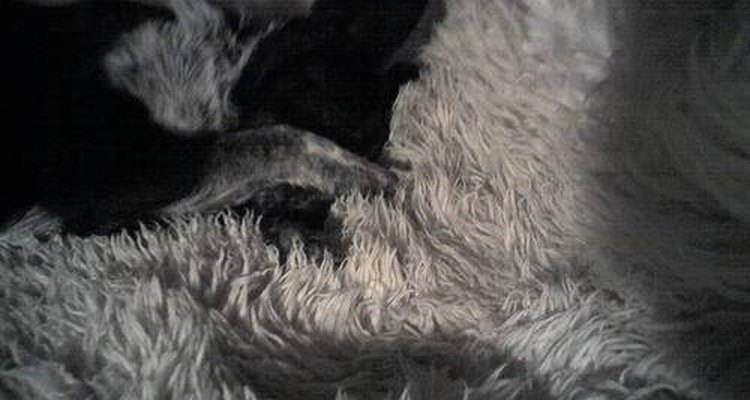 La piel de oveja es suave y cálida.