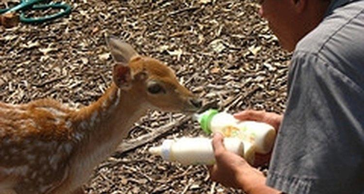 A quantidade de exposição ao BPA para os animais nesses estudos foi semelhante à que foi exposta a um ser humano