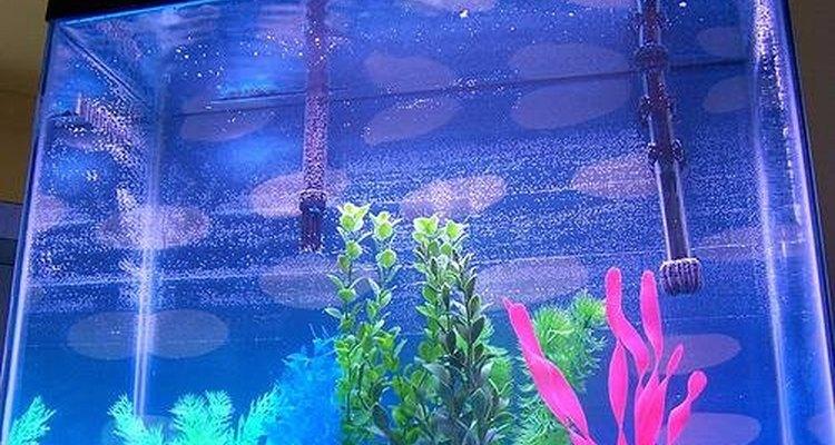 Compre a quantidade certa de cascalho para seu aquário