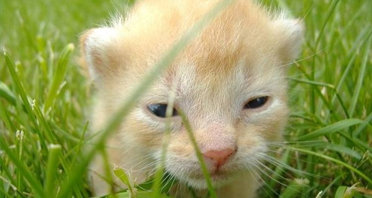 Posso aplicar Frontline na minha gata que tem filhotes?