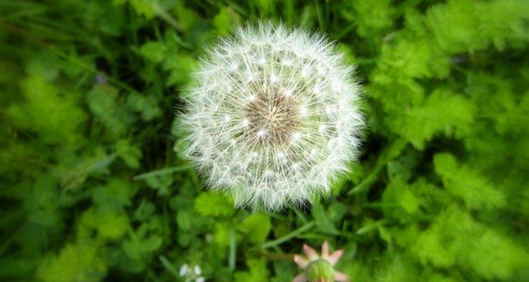 El herbicida es un ahorro de tiempo definido, pero funciona mejor si es aplicado en el momento adecuado del día.