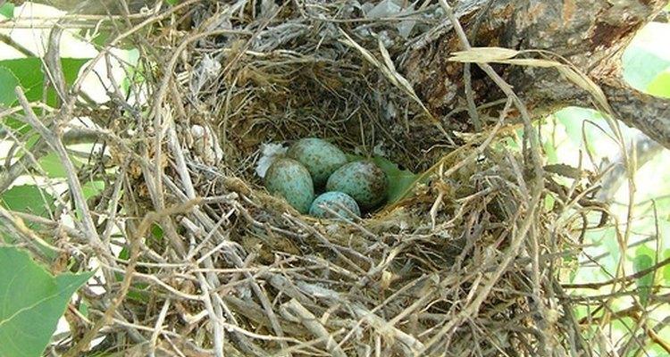 La observación de aves es un pasatiempo popular en todo el mundo.