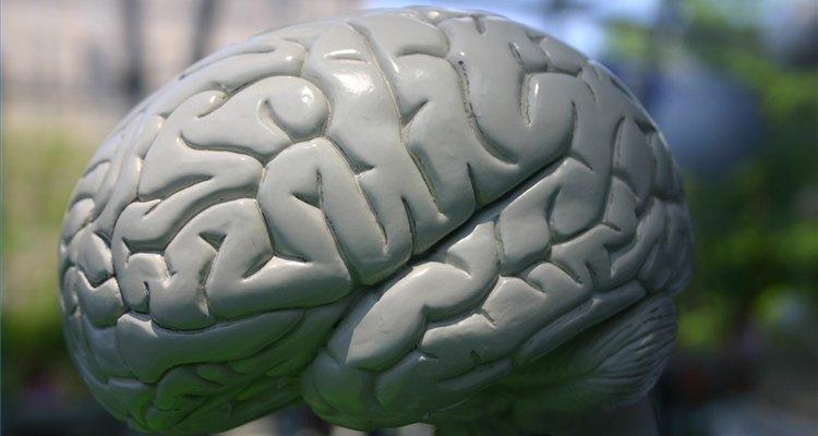 A atrofia cerebral é um termo que engloba qualquer perda de células no cérebro, não importando a causa