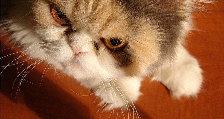 Os gatos são sensíveis às mudanças na rotina